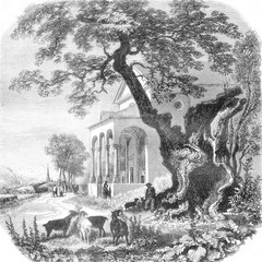 The Platane of Trons, vintage engraving.