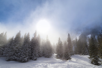 Beautiful alpine scenery on a bright winter day, with fresh snow and fir trees