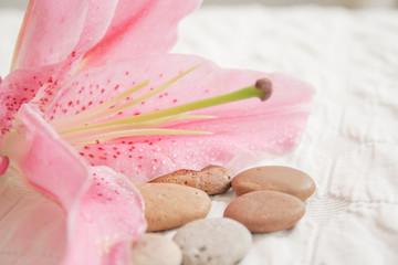 Flor con rocio