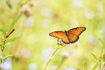 Butterfly and moth fall migration in garden