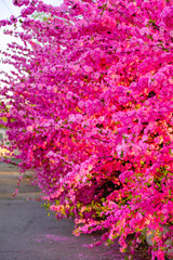 Tree branch in gentle pink blossom