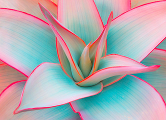 Foto auf Leinwand Blumen agave leaves in trendy pastel colors for design backgrounds