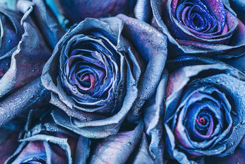 Macro photography of blue - neon roses with raindrops. Fantasy and magic concept. Selective focus.