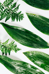 flat lay with assorted green foliage with water drops on white backdrop