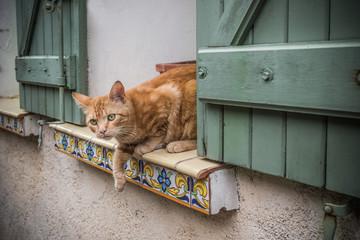 Chat à la fenêtre du village