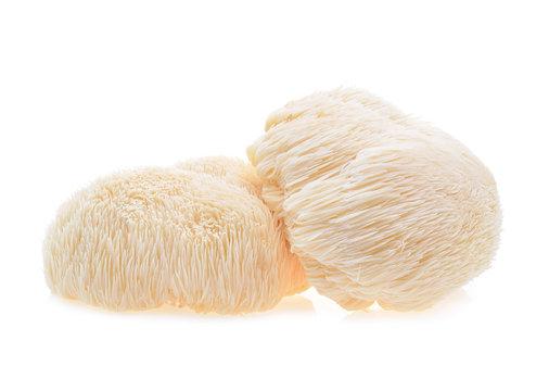 lion mane mushroom isolated on white background.