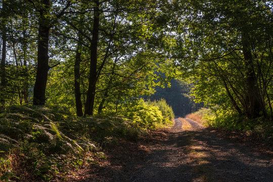 Route forestière dans la forêt des Ardennes françaises