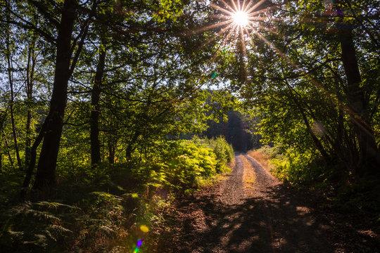 Chemin forestier dans la forêt des Ardennes françaises