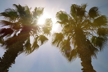 Tropical palm trees with sunlight on the sunset sky . Summer vacation and nature travel adventure concept.