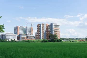 View of construction site building between rice field, hospital building.