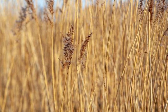 UK estuary marshland wild grass PC corrected