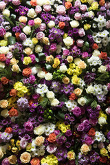 Blumen, Wand, Hintergrund