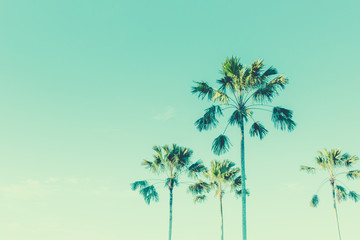 Coconut palm trees beautiful summer day green