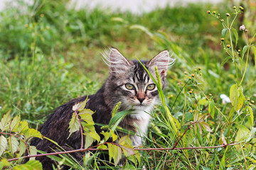 Cat. Beautiful kitten in the grass