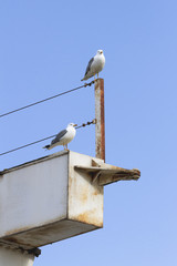 Photographs of seagulls in the port of Aguilas, Murcia
