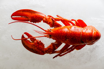 Boiled whole red lobster on ice