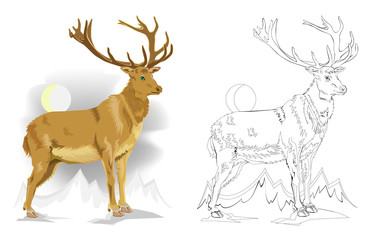 Colorful and black and white pattern for coloring. Drawing of cute deer. Worksheet for children and adults. Vector image.