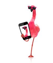 flamingo taking a selfie