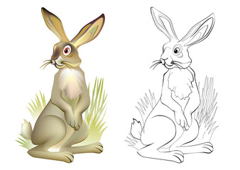 Colorful and black and white pattern for coloring. Drawing of cute hare. Worksheet for children and adults. Vector image.