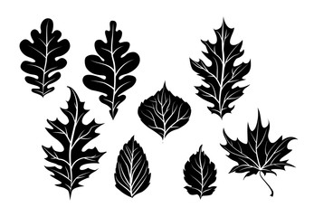 Nature leaves silhouette