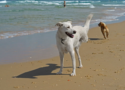 Beautiful disability dog on three legs playing on Beach in Charles Clore Park. Tel Aviv, Israel