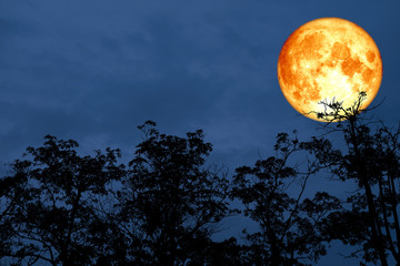 red blood moon back silhouette tree night sky