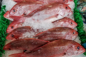 red snapper fish is fresh for your grill