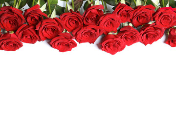 Beautiful red rose flowers on white background, top view