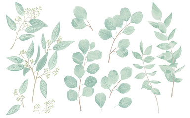 Eucaliptus leaves set. Natural branches, greenery vector illustration.