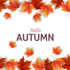 Autumn leaves. Bright colourful autumn oak leaves. Template for