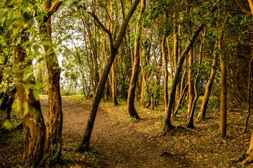 Bosque de tallos naeanja isla, Chile