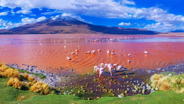 Flamingos in Laguna Colorada , Uyuni, Bolivia