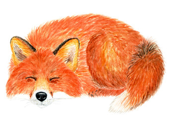 Fox sleeping curled up ring. Watercolor illustration.