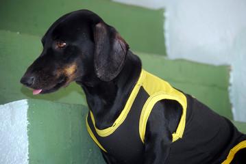 pet - cachorro