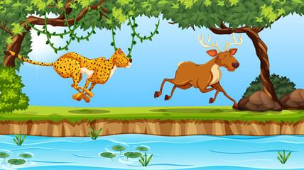 cheetah and deer scene