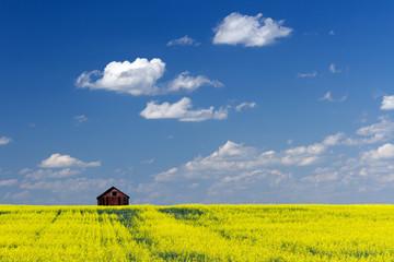 Red Barn Prairie Canola Field