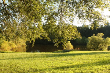 Pond in the golsen light