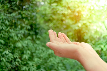 Woman hands place together like praying in front of nature green  background.