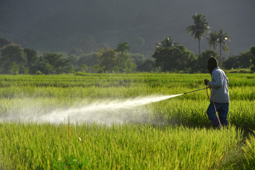 Farmer spraying pesticide on a field of white .