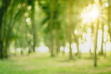 Blur nature bokeh green park by beach and tropical coconut trees