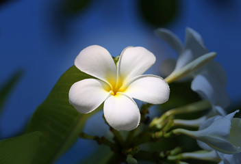 Photo of a tropical tropical beautiful flower