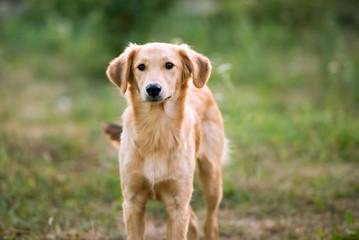 non-pedigree dog on the grass