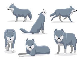 Grey Wolf Cartoon Character Vector illustration