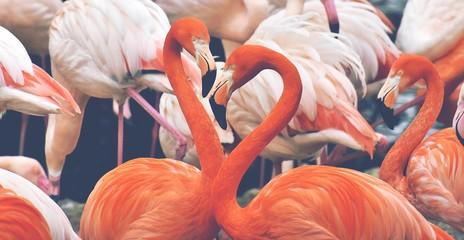Flamingo couple bunch white red pink animal birds wildlife