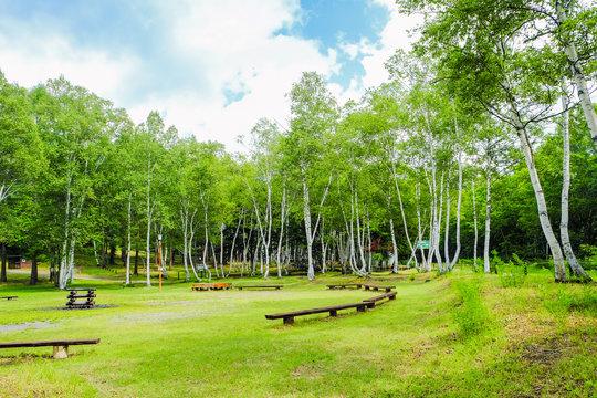 白樺の森とキャンプ場