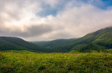 grassy meadow in mountains. wonderful morning with clouds above the distant ridge.