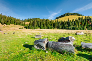 stumps and logs on a grassy meadow. spruce forest on the hill. beautiful landscape in mountain on a sunny autumn day