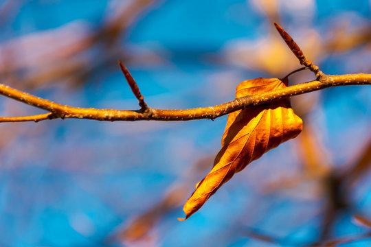 last foliage on the tree. lovely autumn momentum.