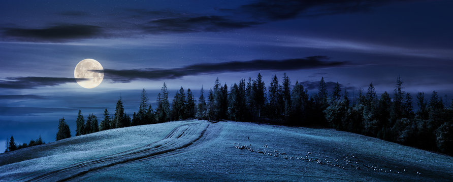 road uphill in to the forest at night in full moon light. beautiful countryside panoramic scenery. herd of sheep grazing on the meadow.