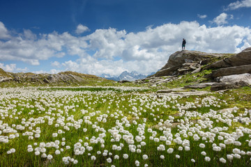 Fototapete - Wollgrasfeld mit Wanderer in den Bergen